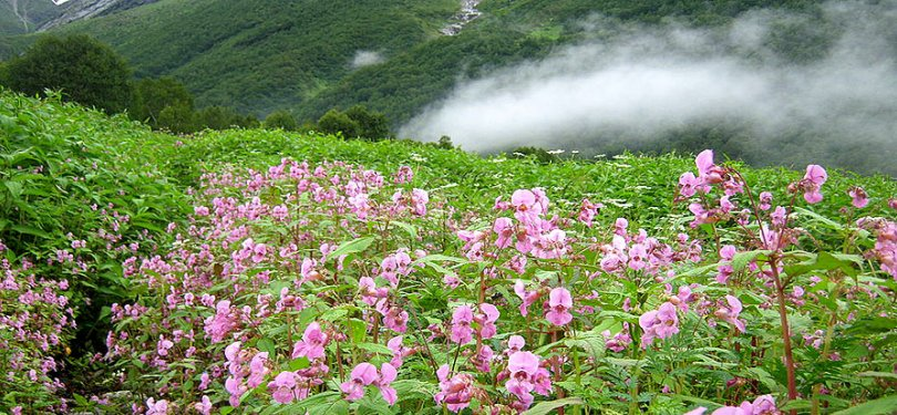 Valley of flowers of National Park