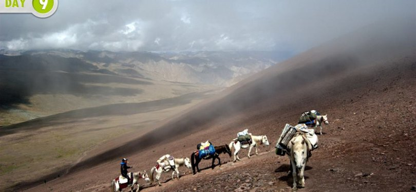 Pony Ride in Leh