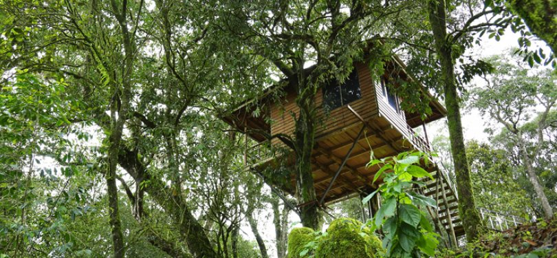 Nature Zone Resort Tree House