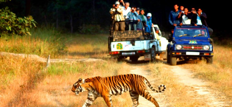 Majestic Uttrakhand Tour Corbett National Park