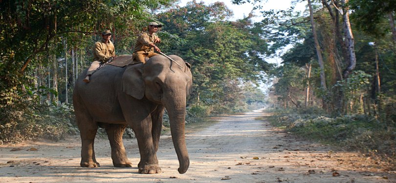 Elephant Ride at Nameri National Park