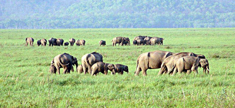Elephant Grazing at Periyar