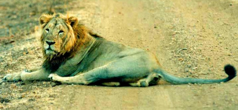 Gujarat Tour Gir National Park