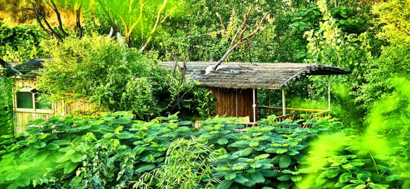 The Tree House Resort Lush Green Outdoor
