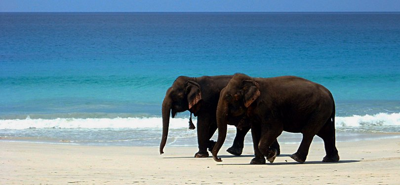 Elephant Beach in Havelock Island