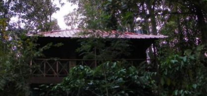Jungle Retreat Wayanad Twin Cottage