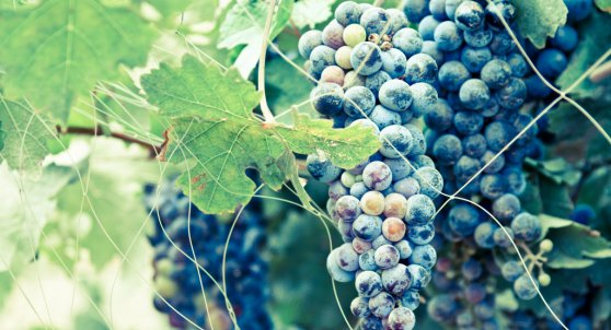 Best Vineyards in India