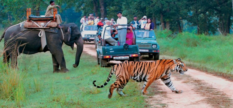 Corbett National Park Animals Sightseeing