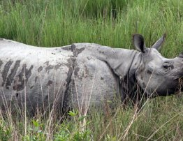 Kaziranga National Park
