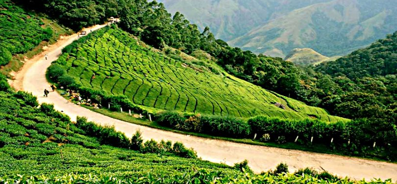 View of Munnar Tea Gardens