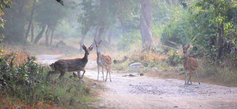 Majestic Uttrakhand Tour Deers Spotted