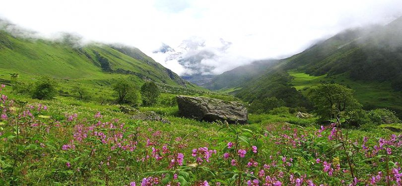 valley of flowers uttranchal