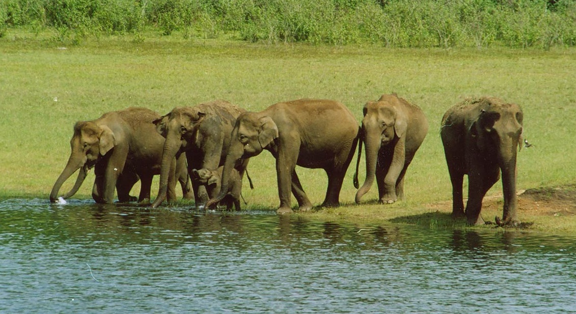 periyar in thekkady Periyar national park and wildlife sanctuary is located in thekkady, keralait is very famous among tourists as elephant and tiger reserve the park covers 357 square miles of land.